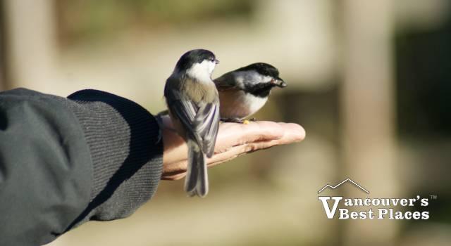 Feeding Birds at the Nature Sanctuary