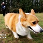 Dog at Maple Ridge Dog Park