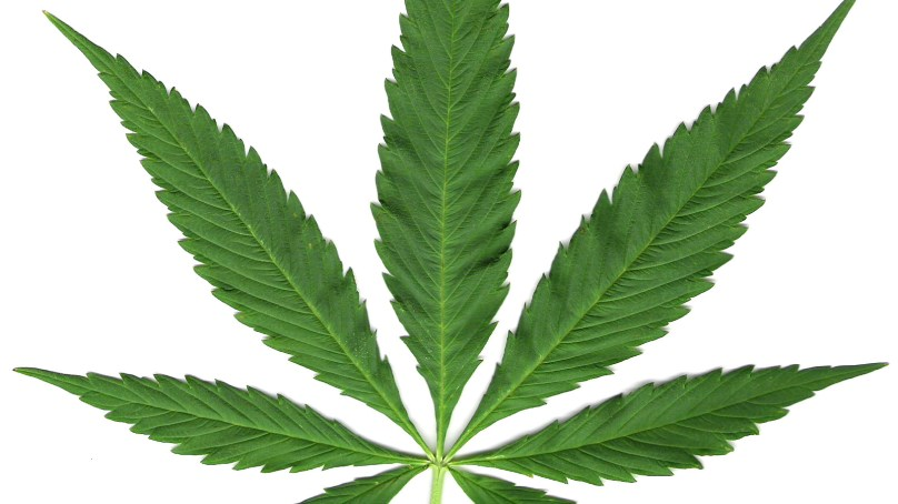 The Weed Diet? Pot's Baffling Effects on Weight