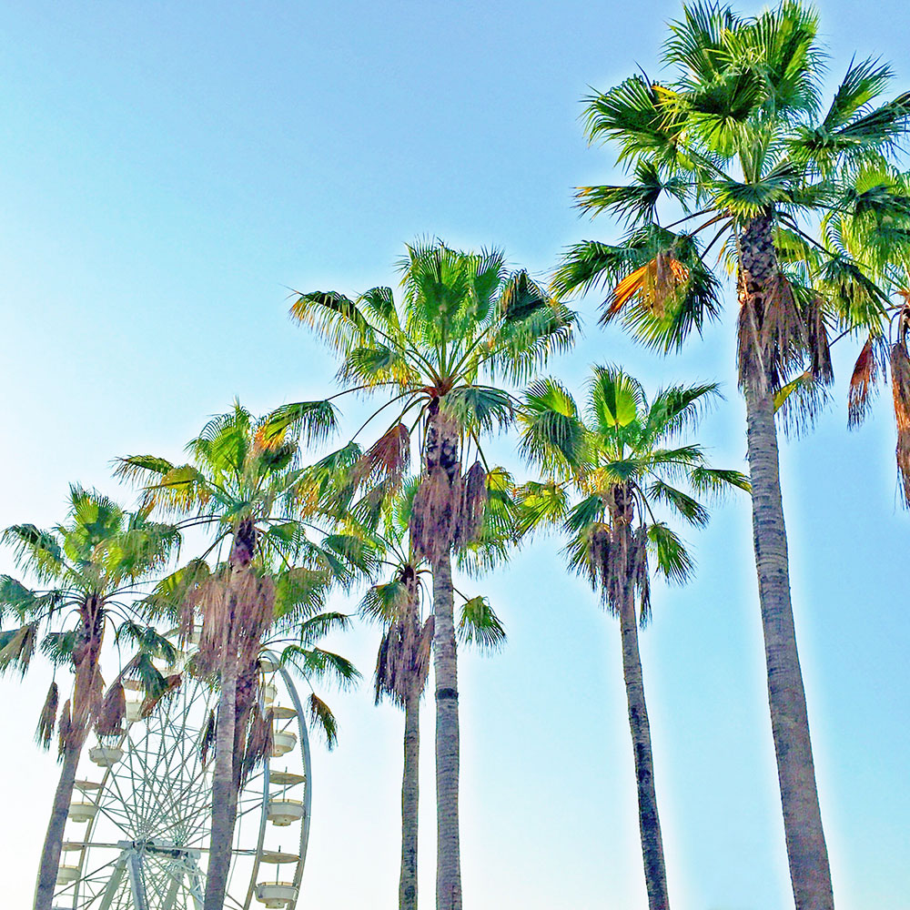 vandi-fair-dallas-fashion-blog-lauren-vandiver-southern-texas-travel-blogger-visit-long-beach-california-palm-trees