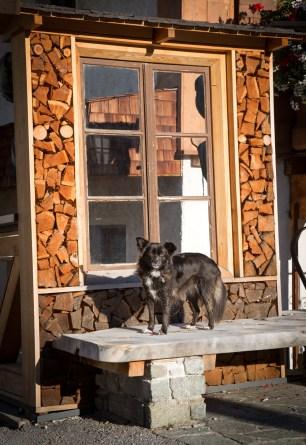 Travelling through Europe and Italy with our Dog, Tikka. Vandoggo.