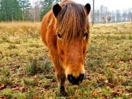 My carrot friend