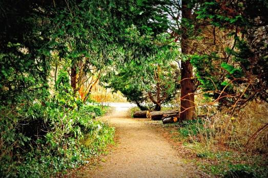 Forstbotanisk Have, Charlottenlund