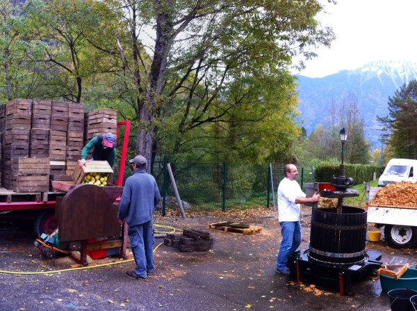 cider-making