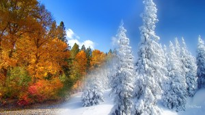 fall to winter