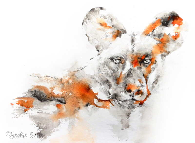 Painted wolf by Stephie Butler