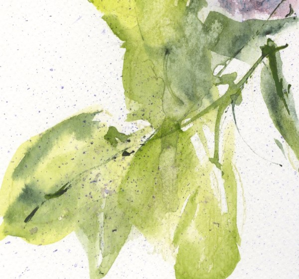 VMW00160 - Lilacs from the Garden. Watercolour on paper by Vandy Massey. Leaf detail.