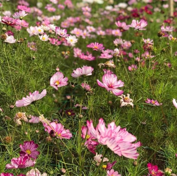 Midnight-Garden-Flower-Farm-2-@themidnightgarden-•-Instagram-photos-and-videos