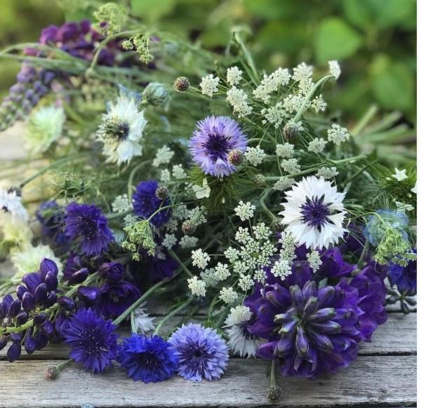 Midnight-Garden-Flower-Farm-4-@themidnightgarden-•-Instagram-photos-and-videos