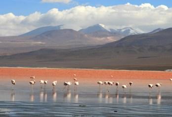Laguna Colorada. Se trata de un lago salado, poco profundo, localizado en Bolivia. www.americantravel.ru