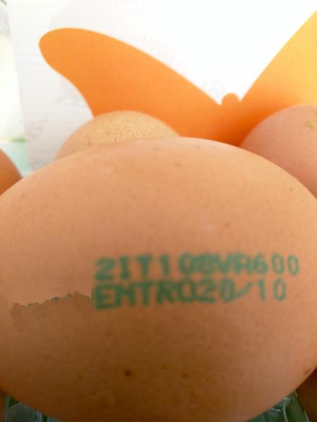 timbro uovo