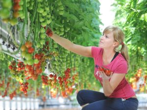 Fresh produce grower expands deliveries with Maxoptra