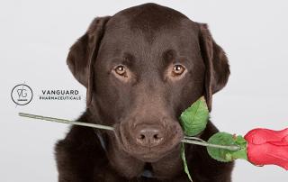 η αγάπη του σκύλου