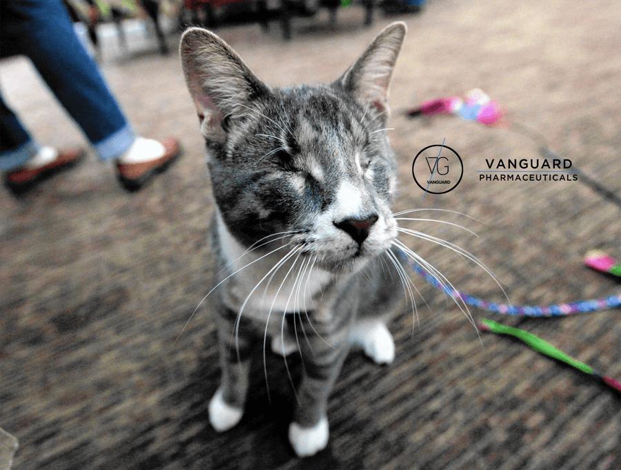 γάτες με ειδικές ανάγκες