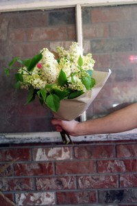 white lilacs bunched and wrapped
