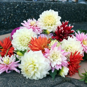 dahlia flower subscription