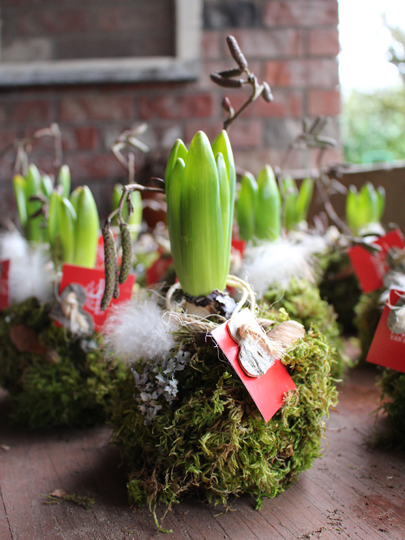 hyacinth bulb valentines floral giftable langley, bc