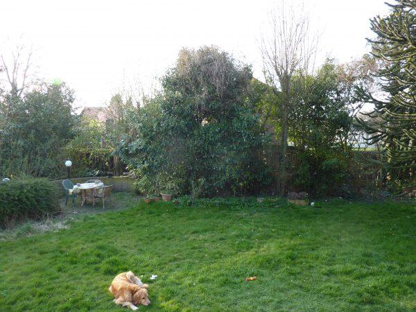 Sint | De tuin was hier alweer iets meer besloten. Op de voorgrond onze Hovawart, Dogle (2004-2015). Foto bvhh.nu/Marij Coenen 2011.
