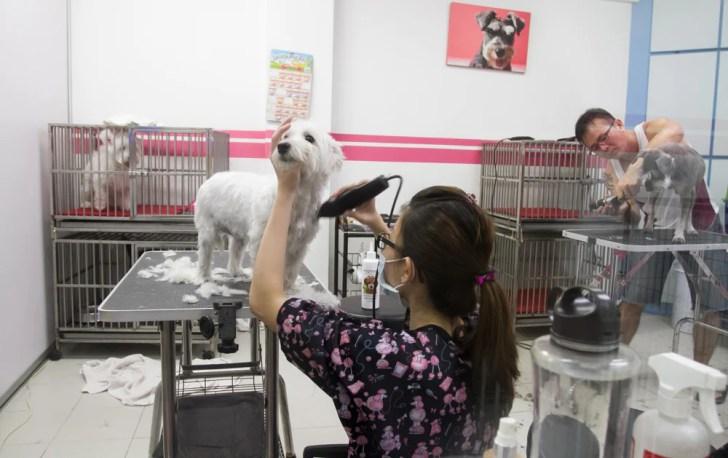 Being Obedient - Pet Loft Singapore Grooming
