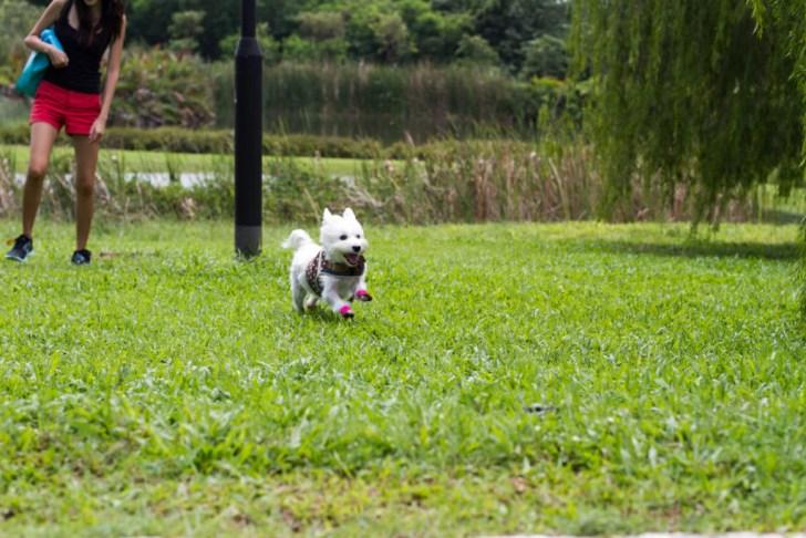 Dog-friendly Seng Kang Riverside Park | Vanillapup