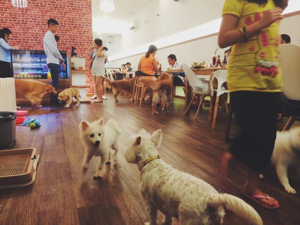 Happenstance Cafe Review | Vanillapup