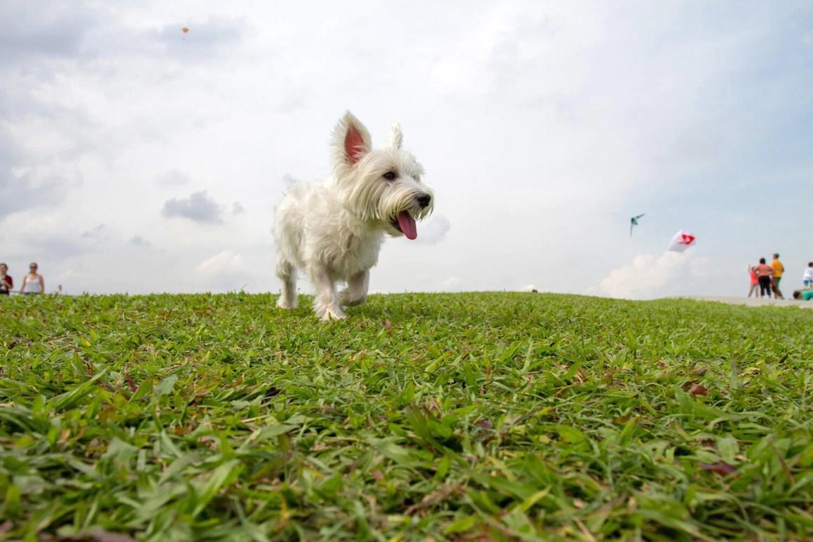 Dog-friendly Marina Barrage | Vanillapup