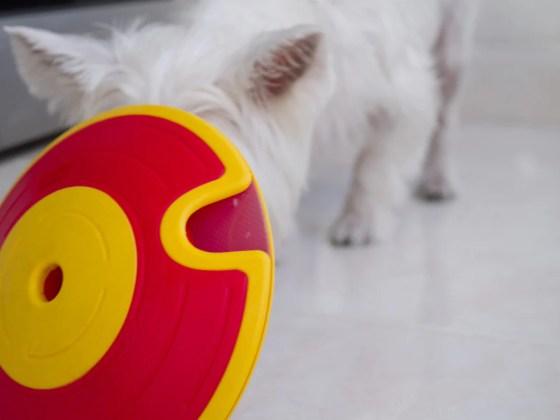 Nina Ottosson Dog Treat Maze Toy Review | Vanillapup