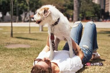 Zee.Dog Flash Collar and Leash