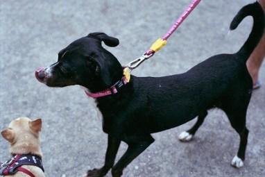 Zee.Dog Cake Collar and Leash