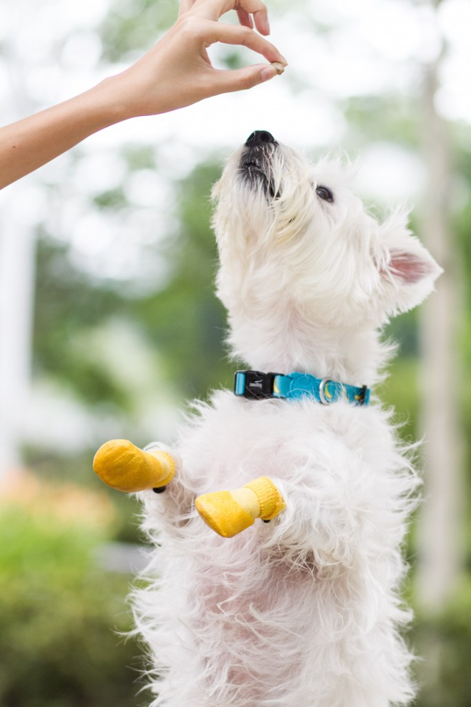 Latte with yellow dog socks