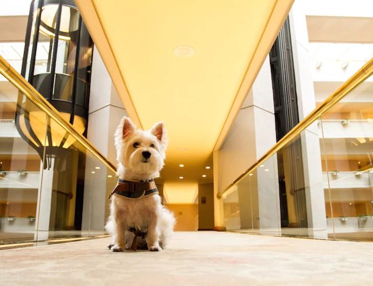 Pet-friendly Regent Singapore Hotel Staycation Lift Lobby | Vanillapup