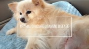 Cranial Cruciate Ligament Disease: Breeds at High Risk, Symptoms, Treatment Options