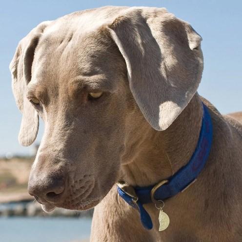 My Better Half Pet Charms - Life Saver | Vanillapup