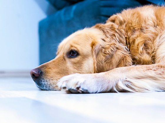 Infographic: Tips on Moving House With Your Dog | Vanillapup