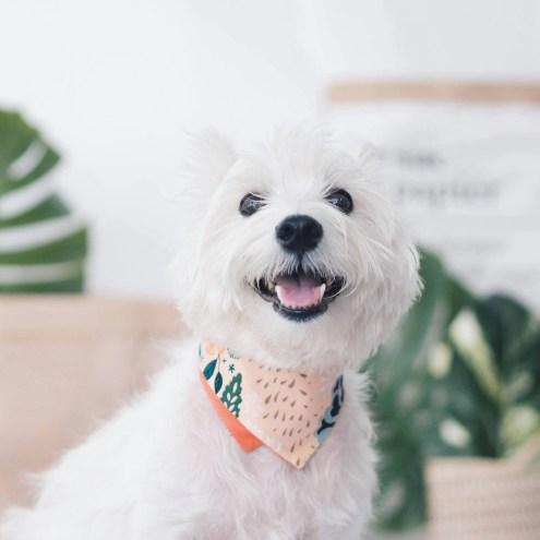 Ohpopdog SS 17 Peach Blossom | Vanillapup