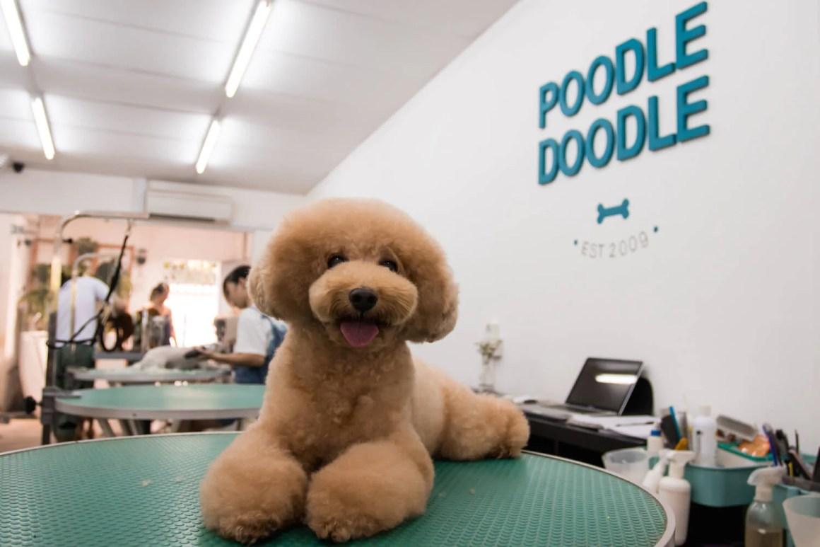 Poodle Doodle Grooming | Vanillapup