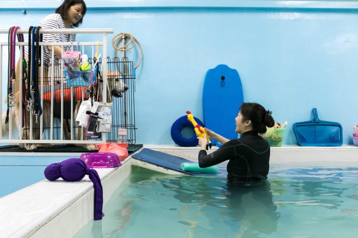 Goldie Getting Down the Pool Ramp | Vanillapup