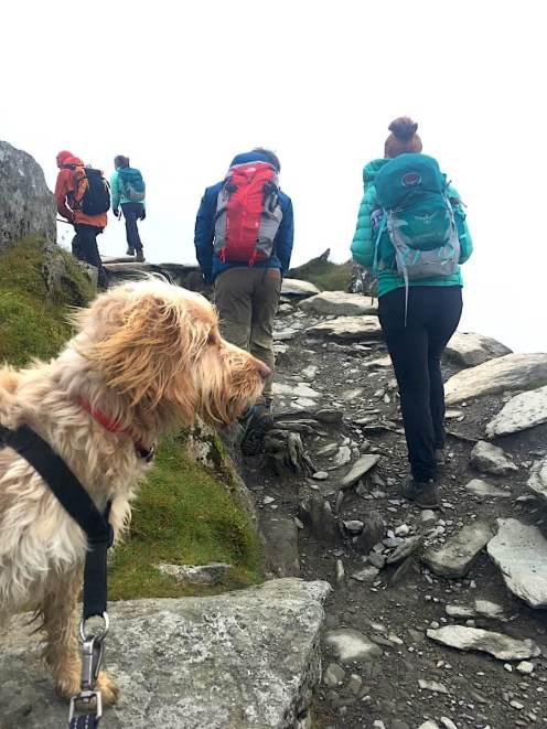 Hiking With Dogs - Luna Going Up Snowdon | Vanillapup