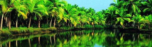 Kerala Backwater plam tress