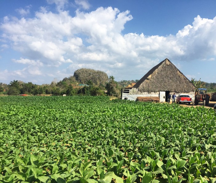 Viñales Horseback Riding & Cuban Tobacco Farms Plantation