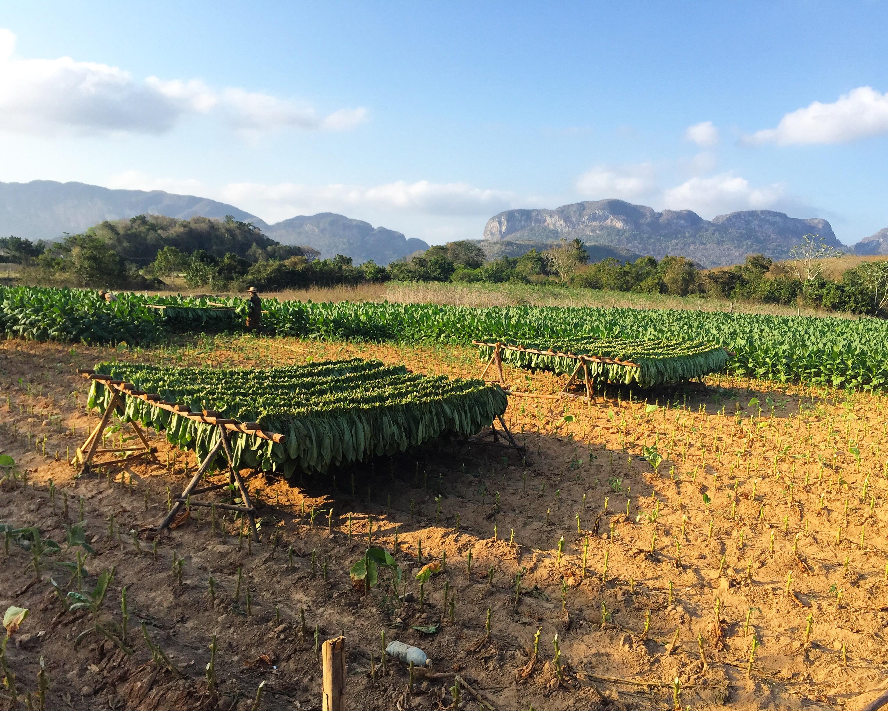 Vinales Horseback Riding Cuban Tobacco Farms