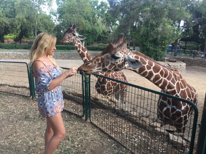 Feeding Giraffes in Ramat Gan Safari Zoo