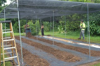 The 50% shade cloth is attached to the top of the frame, and the rows are mounded with composted tree chips.