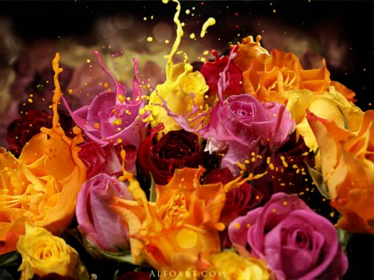 Roses Bouquet Splash Effect
