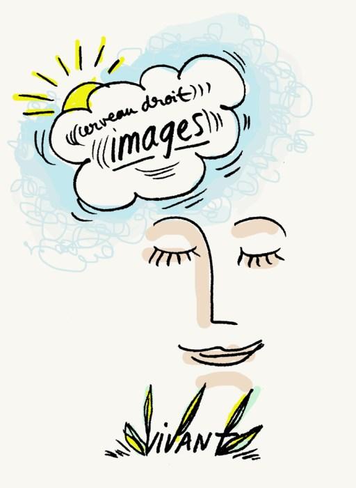 Cerveau droit et images