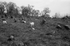 Jewish cemetery, Orhei, Bessarabia, Moldova, 2016