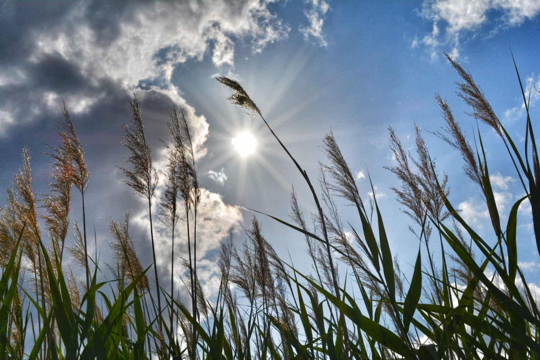 Natürlicher Sonnenschutz