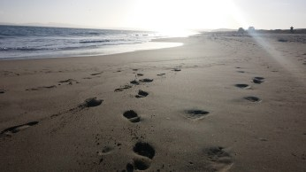 Footsteps in the sand along Limantour Beach. FAITH MECKLEY