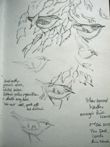 Yellow-browed Warblers