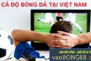 Cá độ tại Việt Nam đã được hợp pháp hóa chưa?